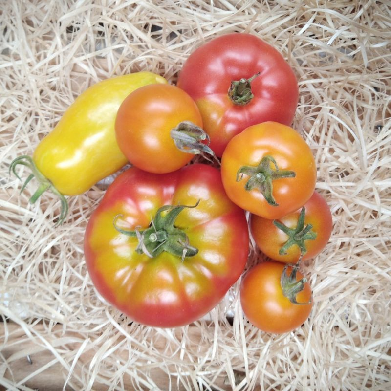 Tomates anciennes - 600g